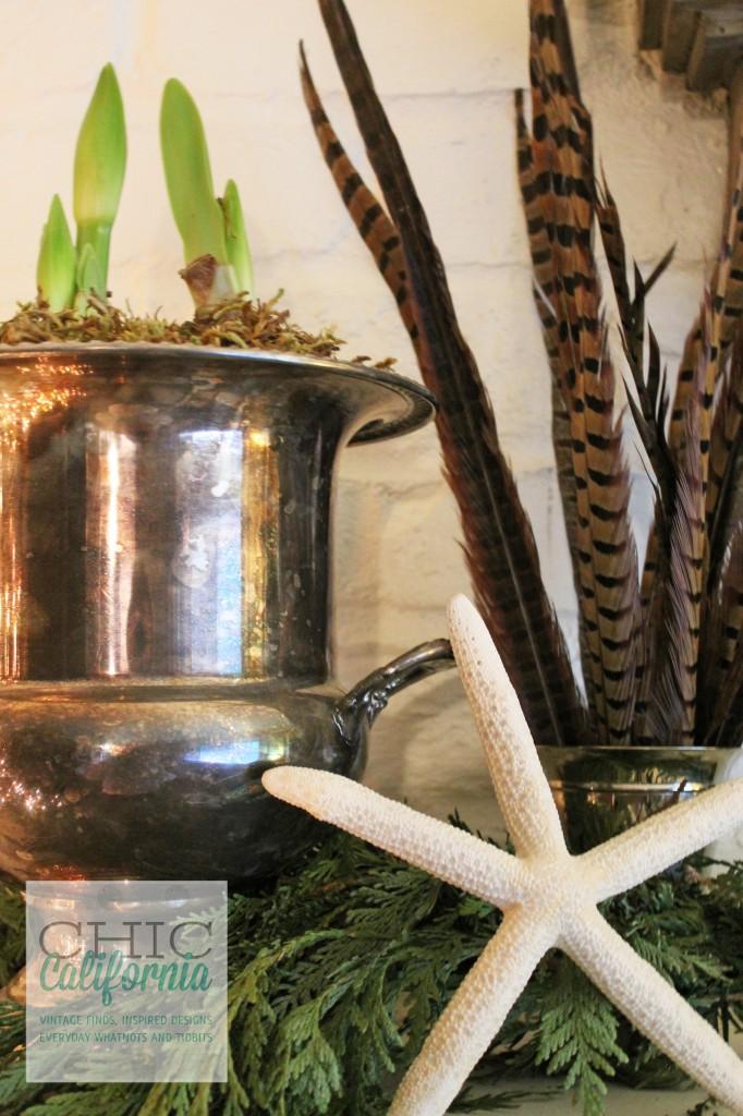 Amarylis, champagne bucket, starfish,feathers