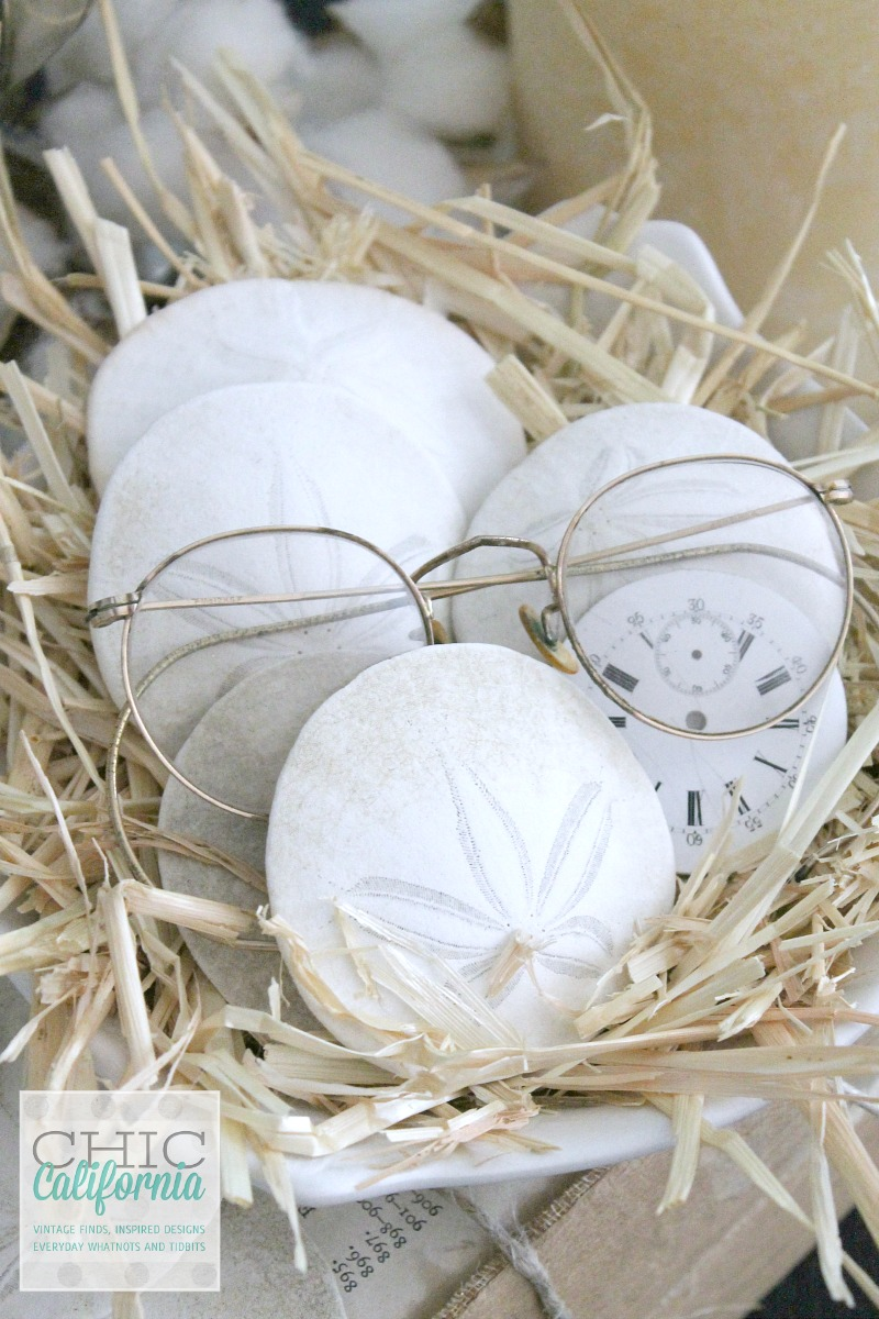 Glasses and Sand Dollars from Chic California