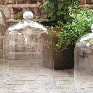 Glad Bell Jar Cloche